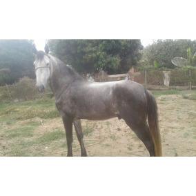 Vendo Cavalo Manga Larga