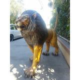 León Disecado Animal Fibra De Vidrio Tamaño Real Pieza Única