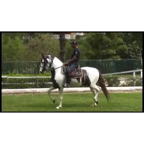 Cobertura De Cavalo Mangalarga