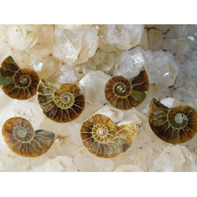 Set De 6 Splits De Ammonitas Para Artesanos Joyeros 412-3