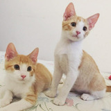 Lindos Gatitos En Adopción Responsable