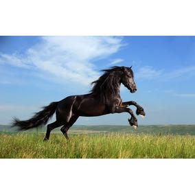Exognosia - Equinos Raças E Maneio