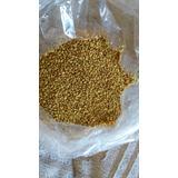 Semente De Alfafa Criola - Brotos,feno E Pastagem -vlr 1 Kg