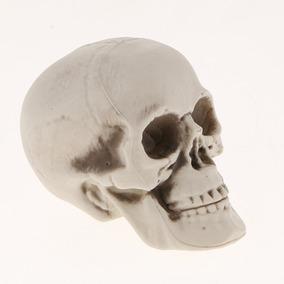 Cabeza Cráneo Plástico Figurilla Modelo Animal Esqueleto E