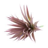 Natural Artificial Suculentas Plantas Flor Hierba Casa Plant