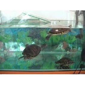 Aquario Gigante Para Carpas Ou Tartarugas Em Acrilico