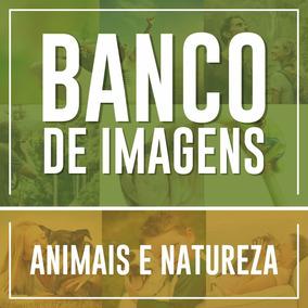 Banco De Imagens Animais E Natureza - Alta Resolução