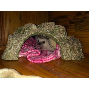 Toca Hedgehog, Ouriço-pigmeu-africano