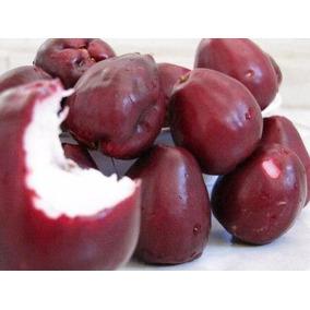 10 Sementes Jambo Vermelho