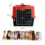 Caixa Transporte Casinha Porta - Bull Terrier - Bernese