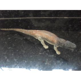 Descobrindo O Mundo Dos Dinossauros - Postosuchus Salvat