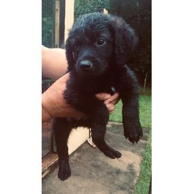 Doação De Lindos Filhotes De Cachorro