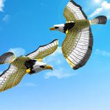 Gavião Águia Pássaro Falcão Gaivota Voadora À Pronta Entrega