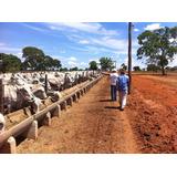 Maravilhosa Fazenda No Município De Arinos -mg - 1515941 - 3607164