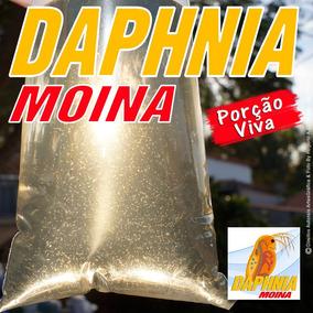 Daphnia Moina Alimento Vivo Porção Estado De Minas Gerais