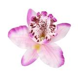 20pcs Flor Artificial Orquídeas Púrpura Claro Decoración