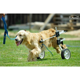 Carrito Para Perros Grandes Petwheels - Reforzado - Stock