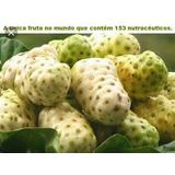 Noni À Fruta Que Combate A Cinomose.( 4 Kilos ) Oferta