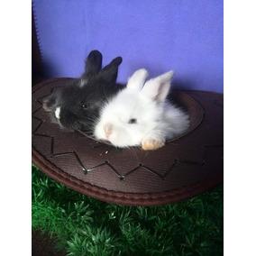 Hemosos Conejos Angora