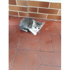 Doacao De Filhotes De Gatos