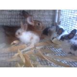 Conejos, Gazapos O Conejos De 1 Mes Mariposas Y Chinchilla