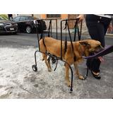 Silla De Ruedas Para Perros Gatos Ayudemos