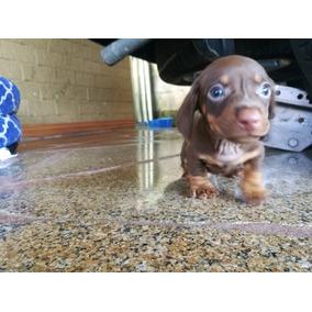 Cachorros Salchichas Mini Chocolate