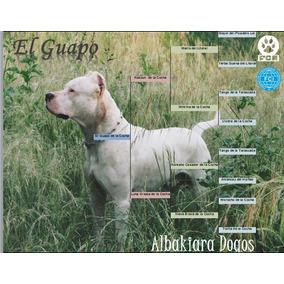 Dogo Argentino Cachorros Con Pedigree Fca