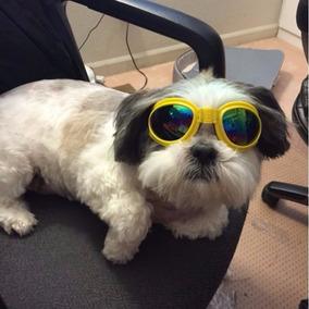 Oculos Para Caes Cegos - Cachorros no Mercado Livre Brasil 64e4c8f4ac