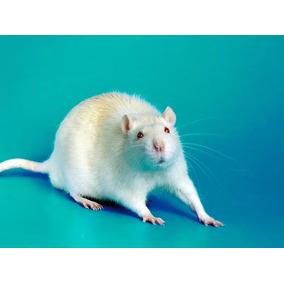Camundongos E Neonatos Para Alimentação De Animais Exóticos