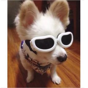Oculos De Sol P caes G - Cachorros no Mercado Livre Brasil 9525b696cb