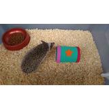 Terrario Para Erizos, El Mejor (kit Completo) Pepote Pets