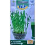 Sobre Con Semillas De Wheatgrass (pasto De Trigo) Marca Hit