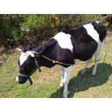 Vaca Becerra