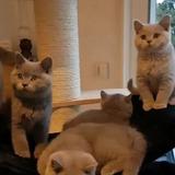 Gatitos Que Buscan Un Hogar De Adopción.