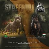 Filhotes De Staffordshire Bull Terrier Fnatic Bulls Kennel