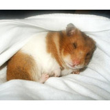 Todo Sobre Hamsters Y 2 Libros De Regalo Adicionales