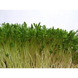 Microgreens Microverdes Germinado Brotes Gourmet Chef
