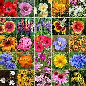 200 Sementes De Flores Sortidas