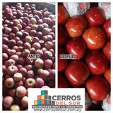 Maquinas Para Procesar Manzanas Y Frutas En General