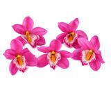 20pcs Flor Artificial Orquídeas Púrpura Decoración Para H