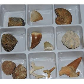 Caixa Com Pequena Coleção De Fósseis Estrangeiros - 3