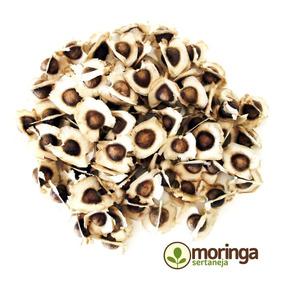 100 Sementes De Moringa Oleifera Para Plantio E Brinde