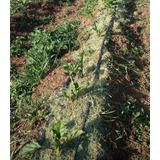 Acolchado Para Agricultura Orgánica