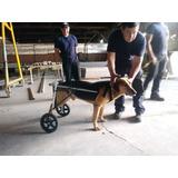 Silla De Rueda Carritos Ortopédicos P/perro De 22 A 35 Kilo