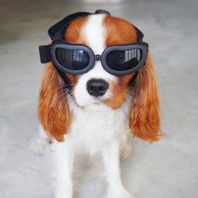 Óculos De Sol Para Cães Com Proteção Uv Raça Pequena Cachor 01bdfad114