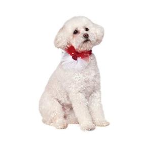 Collar Del Collar Del Animal Doméstico Del Día De Lentejuela