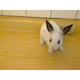 Conejos Caseros Manual Pdf