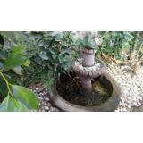 Fuente Para Jardin Usada 3 Niveles