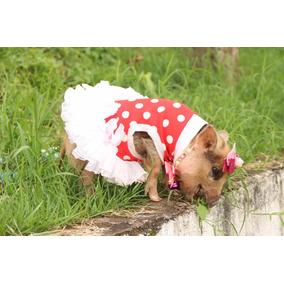 Mini Pig Fêmea Inteira Quase 9 Meses
